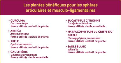 Plantes bénéfiques articulations