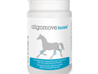 Algomove Horse